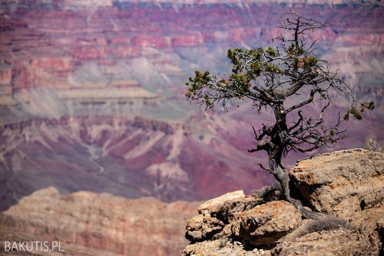 Grand Canyon – najlepszy punkt widokowy?