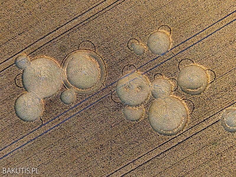 Kręgi w zbożu koło Wrześni